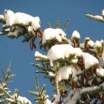 Загадки про новый год: снег, снежинки, снеговик
