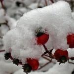 Новогодний сценарий для школы Зима, театрализованное представление