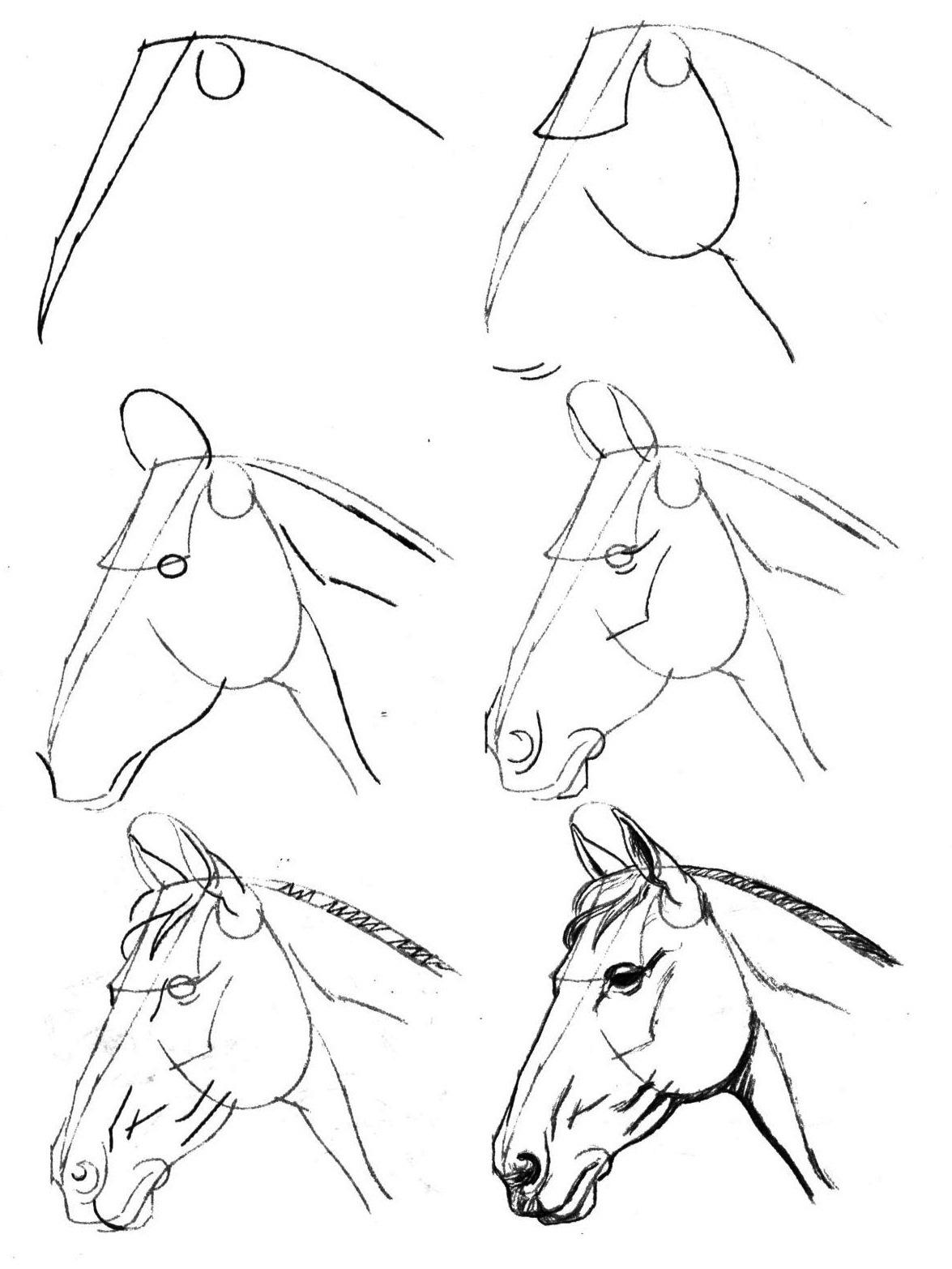 рисуем простым карандашом поэтапно: