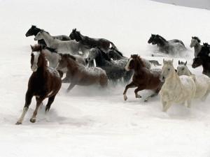 картинки новый год 2014 лошадь