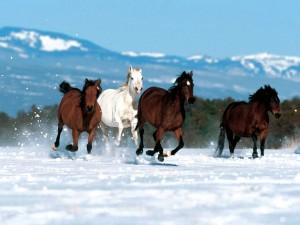 картинки с новым годом лошади
