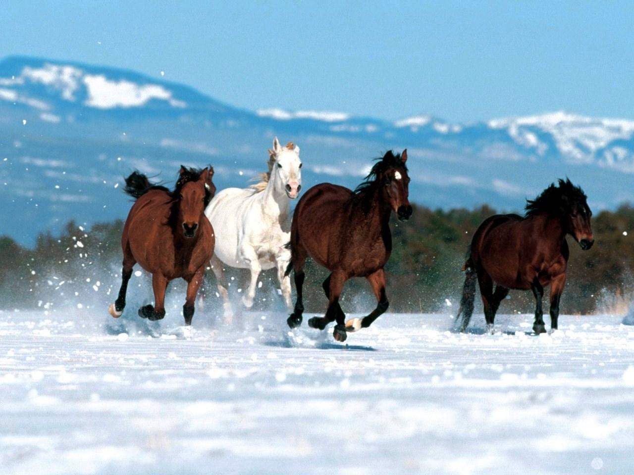 Картинка лошади на новый год нарисованная