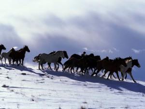 год лошади картинки новогодние