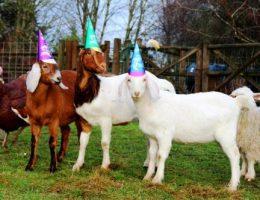 Общий гороскоп на 2015 год Овцы / Козы – что нас ждет в новом году