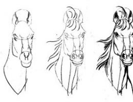 Как нарисовать лошадь карандашом – поэтапно и легко, для начинающих
