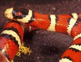 Рожденные в год Змеи – какие они картинка