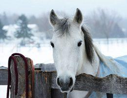 лошадь картинки новогодние
