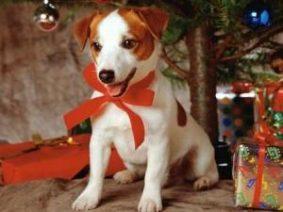 Опасный Новый год для домашних животных – собак и кошек
