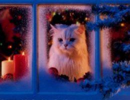 Новый год в одиночестве плюсы