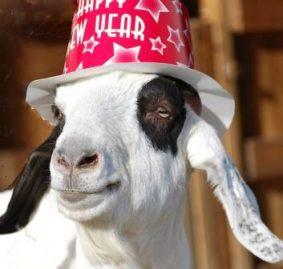 Стихи - поздравление для коллег с Новым годом Козы!