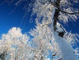 Загадки на Новый год про Зиму и Мороз